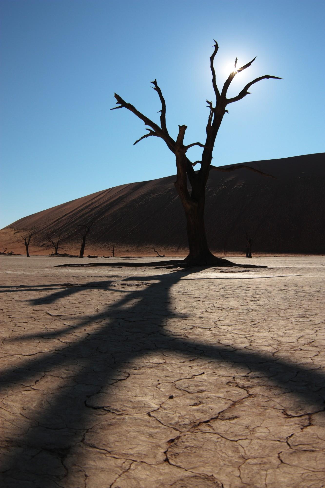 Fa a sivatagban
